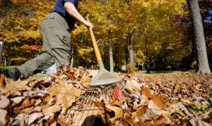 raking_leaves_photo_for_website